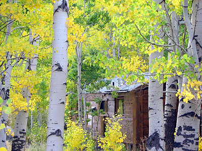 """Hidden Cabin"""