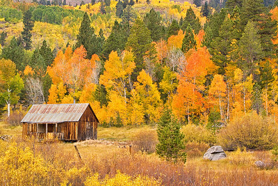Colorful Cabin