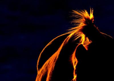 Range Horse