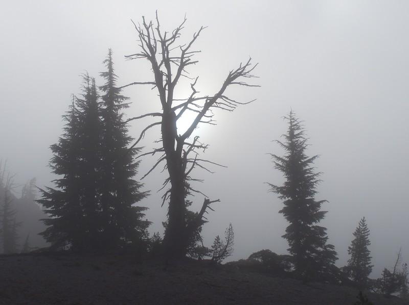 The morning hike began in heavy fog.