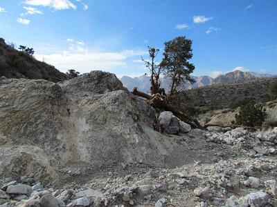 Limestone Trail