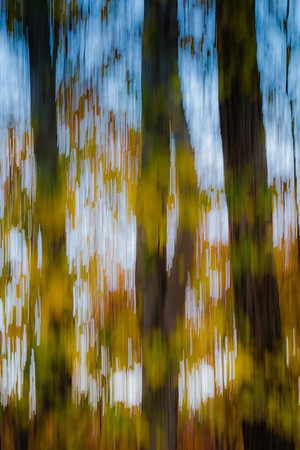 Fall Colors Abstract #1 2013