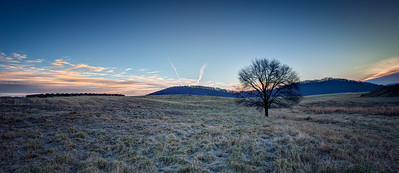 Lonely Tree On A Cold Morning