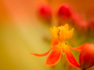 Georgia Blooms