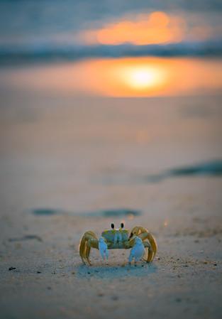 Crab In The Sun