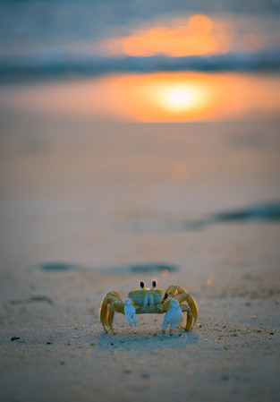 Crab In The Sun