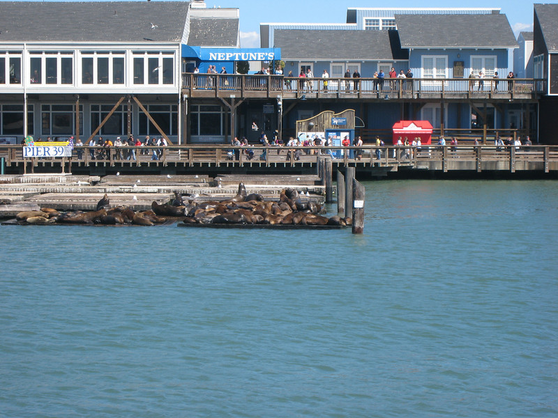 Seals near the Pier 30.  Gosh they were loud.