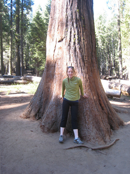 Mariposa Grove (the giant Sequoias). A must see for all!!  So incredible.