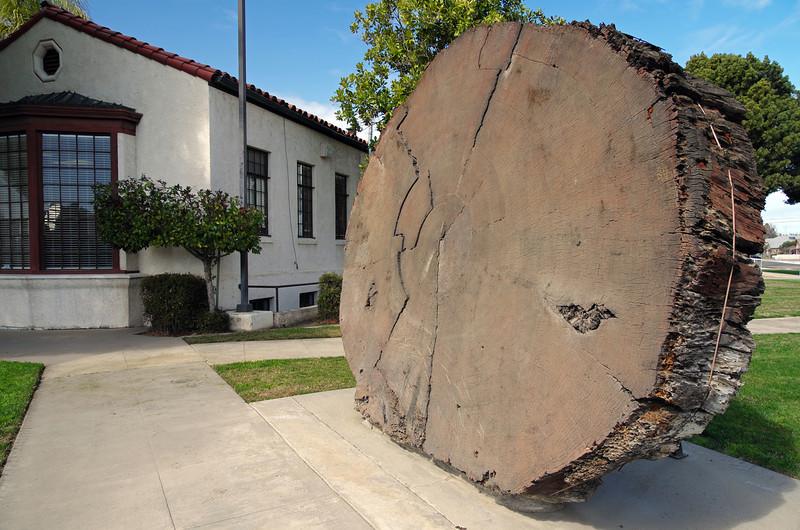 Big Wood next to the Lindsay City Hall
