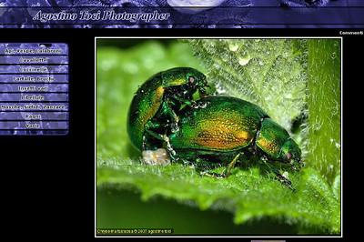 //www.agostinotoci.it Agostino Toci presenta le sue splendide macro di insetti