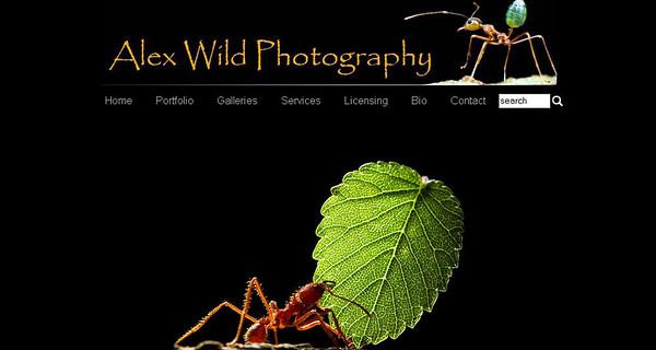 //www.alexanderwild.com  sito dell'entomologo americano Alex Wild, con splendide foto di formiche