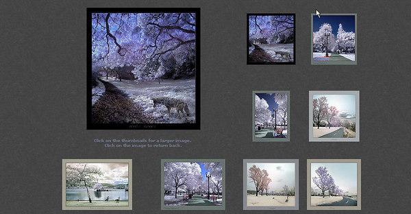 //www.infrareddream.com/  Sito di una fotografa americana, contiene una bellissima galleria di fotografie IR a colori