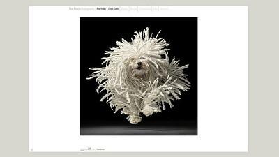 //www.timflach.com/  Gallerie con ritratti di cani, cavalli, altri animali - bellezza e stranezza
