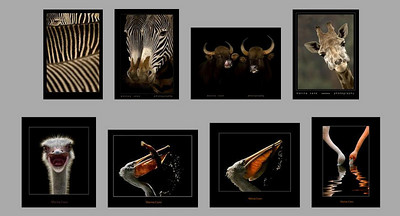 //photo.net/photos/Marina%20Cano  lo straordinario bestiario del portfolio della fotografa spagnola Marina Cano, ospitato da photo.net