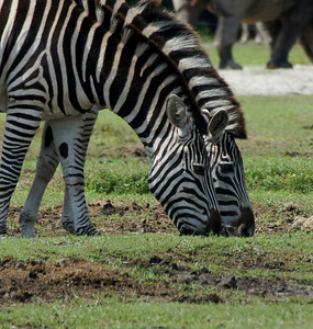 lion country safari 5 4 2013