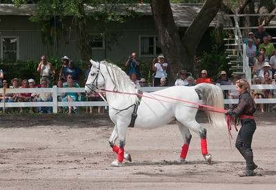 Lipizzaner's with the Laurel Oak group