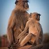 Monkey Lookout