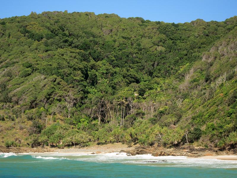 Bray's Beach littoral rainforest
