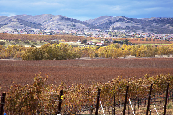 This is the Smith Bench located in South Livermore. This property is owned by Wente Vineyards. They primarily grow Zinfandel here, with some Merlot and Cabernet. Thomas Coyne Winery and Ruby hill are in the distance.