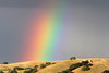 Taken on May 15.<br /> This Rainbow appeared for over an hour after a clearing storm in Livermore, California.
