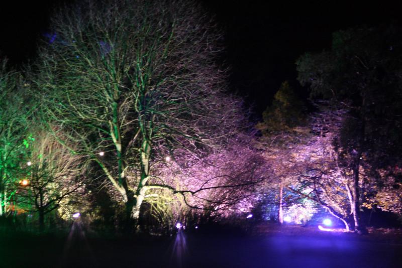 Woodland illuminated scene 2