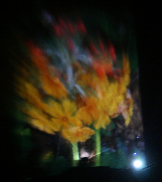 Tree of Blurred colours-Ness