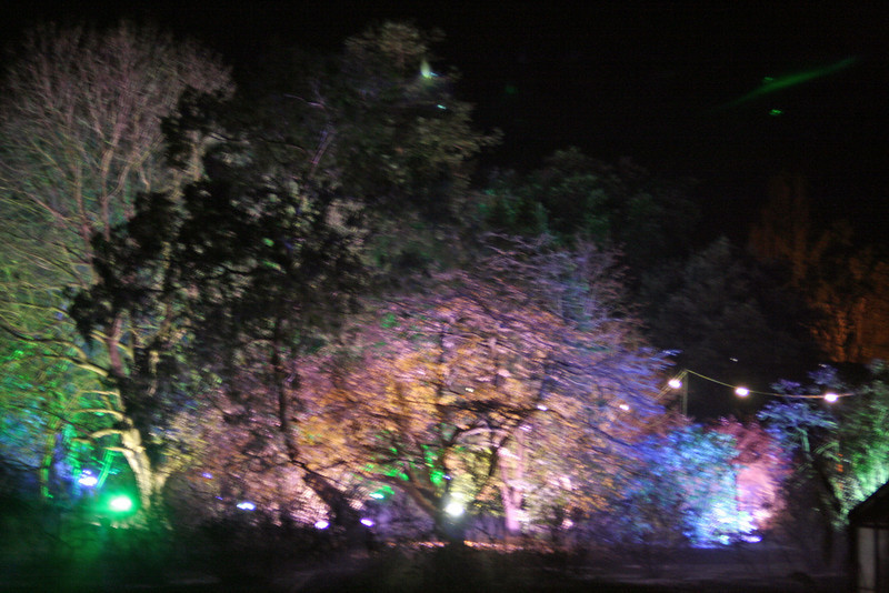 Ness Gardens illuminated