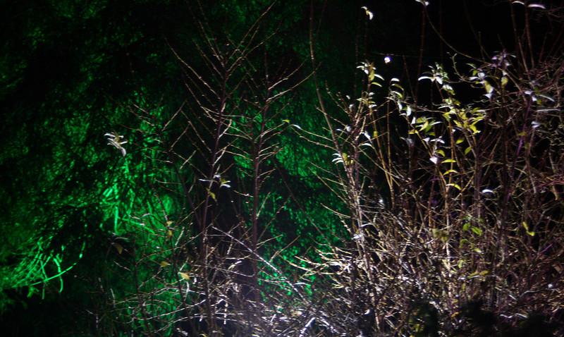 Illuminated grasses-Ness