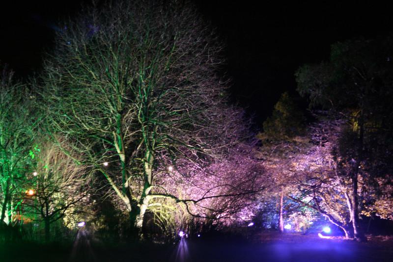 Illuminated woodland scene