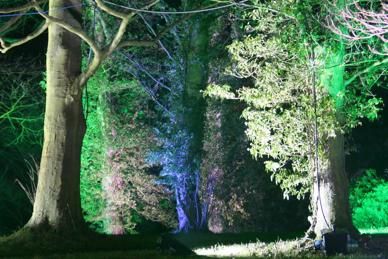 Tall trees entrance