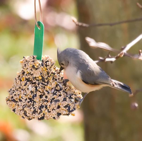 01132008 103441 BIRDFEEDER
