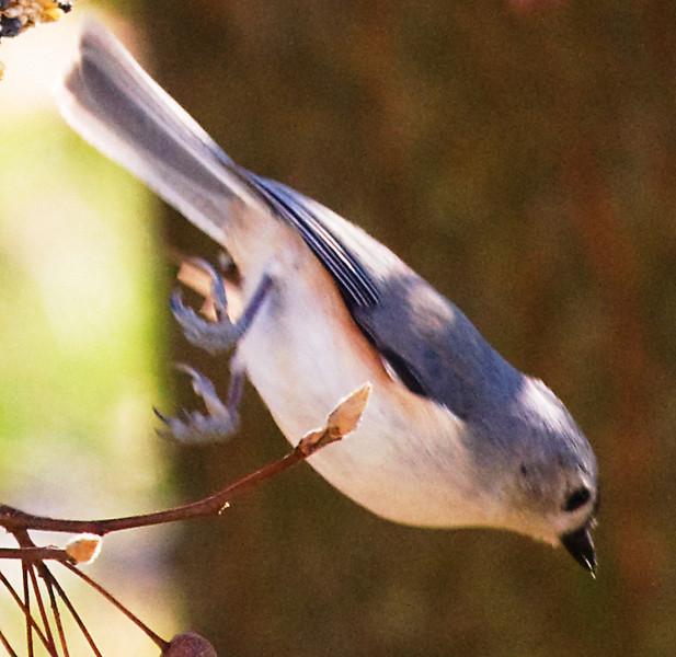 01132008 103309 BIRDFEEDER