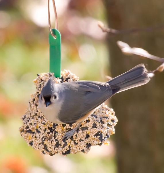 01132008 103307 BIRDFEEDER