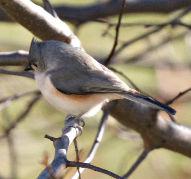 01132008 103107 BIRDFEEDER