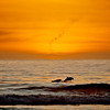 Dolphin Sunset<br /> Aptos, CA