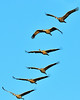 Title Sandhill Stack, other Peaceful Flight, Glide Path, Going South