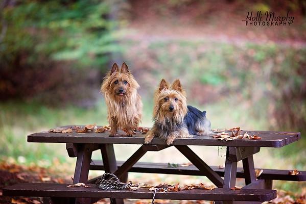 Dog Show Clients