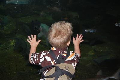 Loki Looking at More Fish