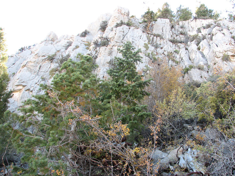 The limestone cliffs near the top of the mountain into which the plane crashed.