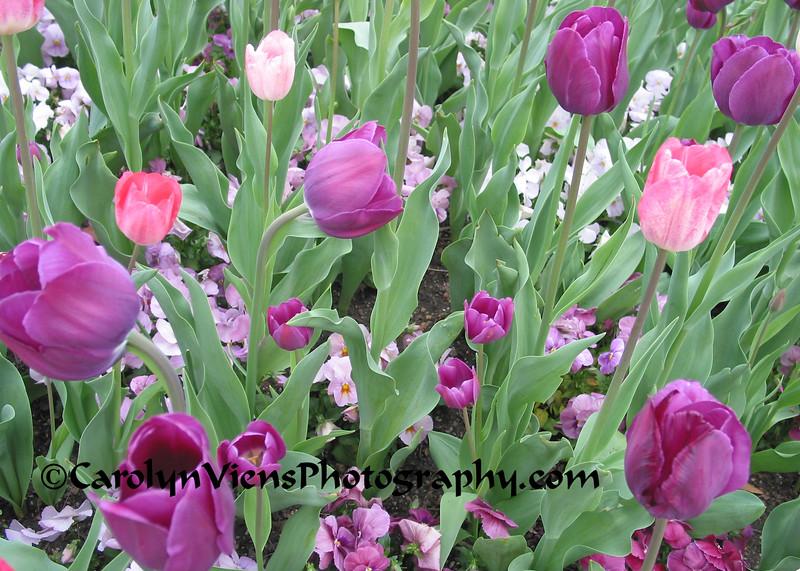 IMG_3593 crop.jpg