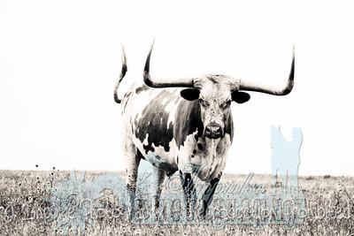 Lonnie Ranch web-1909