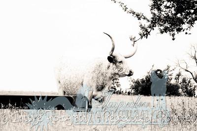 Lonnie Ranch web-1913