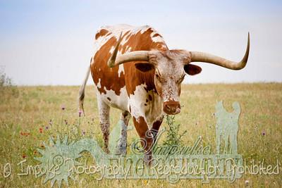 Lonnie Ranch web-1895