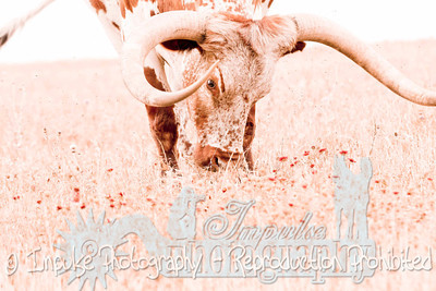 Lonnie Ranch web-1986