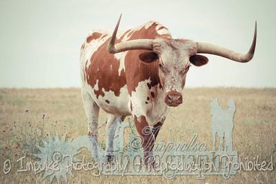 Lonnie Ranch web-1899