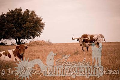 Lonnie Ranch web-1886