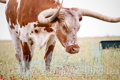 Lonnie Ranch web-1989