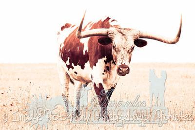 Lonnie Ranch web-1900