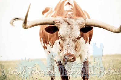 Lonnie Ranch web-1983
