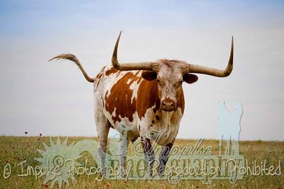 Lonnie Ranch web-1908